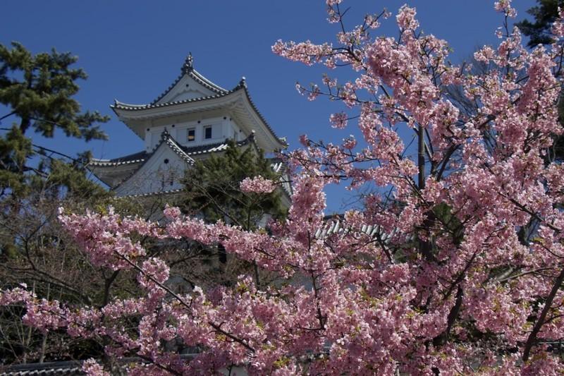 日本の風物詩 桜をオンラインで楽しもう(桜の風景)