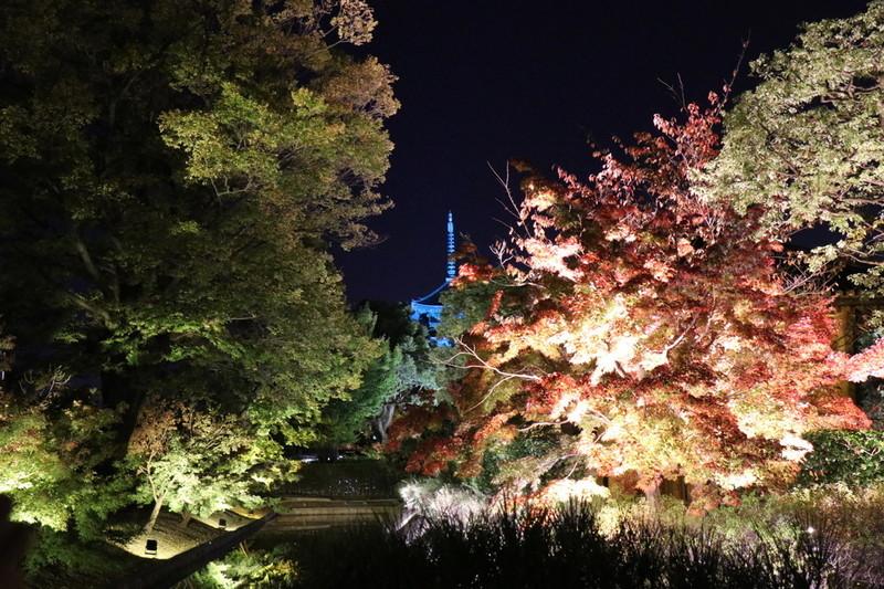 京都 世界遺産「東寺」と紅葉とライトアップ