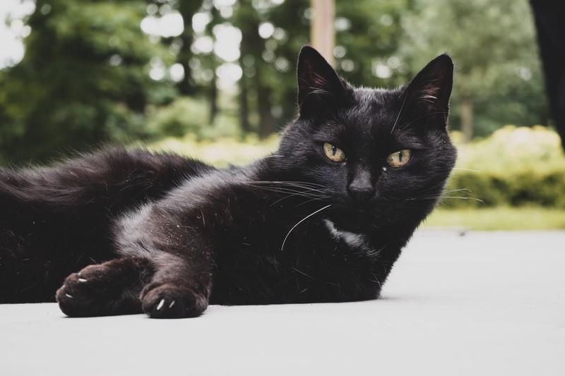 メルカリ発送方法① らくらくメルカリ便 黒猫の写真