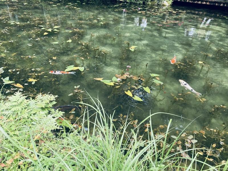 岐阜にあるモネの池はSNSで見るよりも断然生で見る方が美しかった