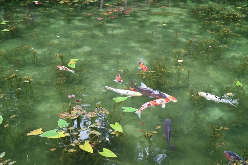 岐阜 モネの池 実際のSNS掲載の写真と同じような感じなのか