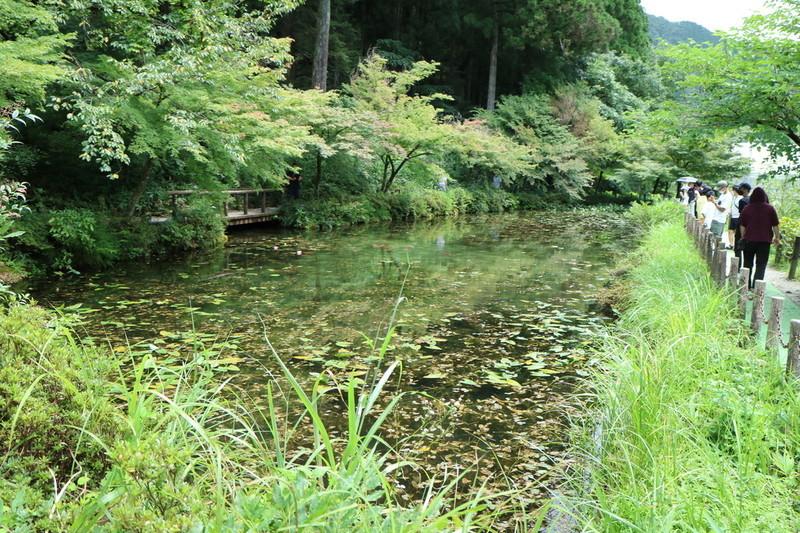 岐阜 モネの池 綺麗な写真を撮るおすすめの構図は?