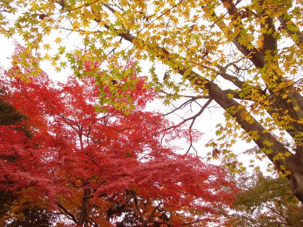 f:id:shiokazeokayama:20180812164340j:plain