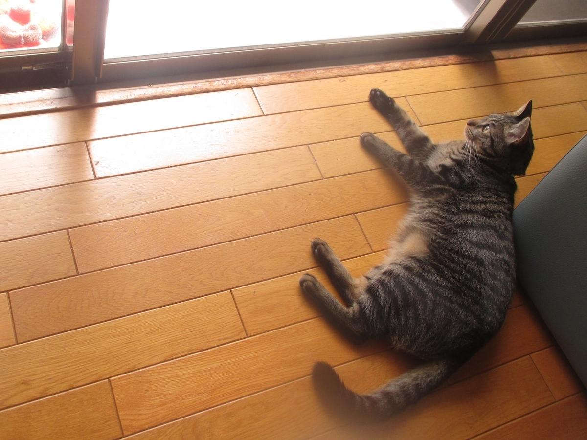 f:id:shiokazeokayama:20190505170343j:plain