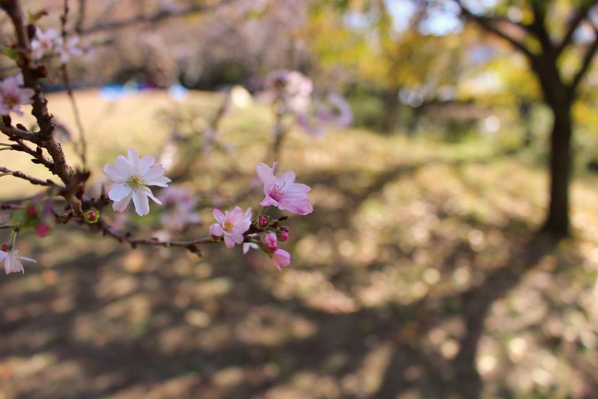 f:id:shiokazeokayama:20200405151412j:plain