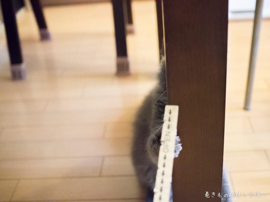 f:id:shion-laperm:20160714114040j:plain