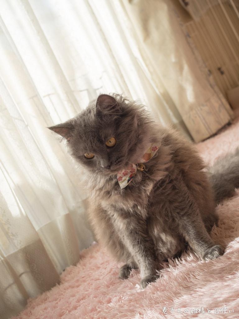 セミロングラパーマの冬毛