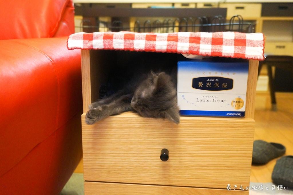 サイドテーブルで眠るラパーマの子猫