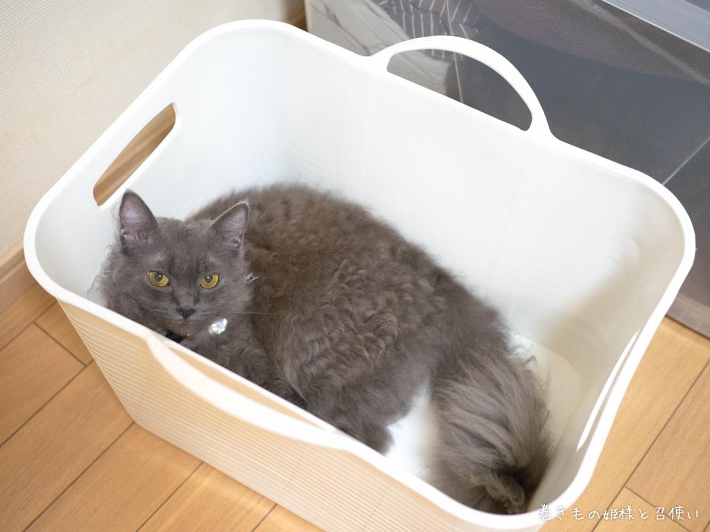 猫のお風呂にぴったりなバスケット