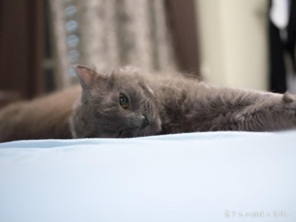 猫写真ラパーマ・ベッドに転がる天使4