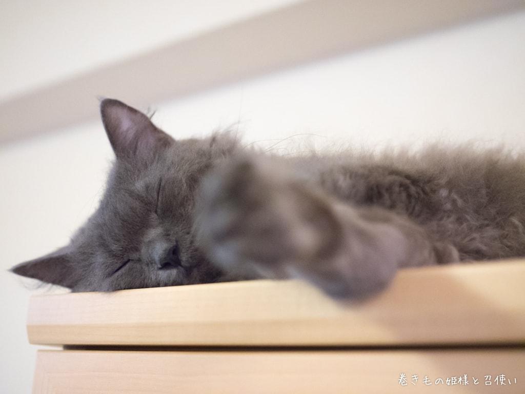 食器棚の上で寝落ちする紫苑さん