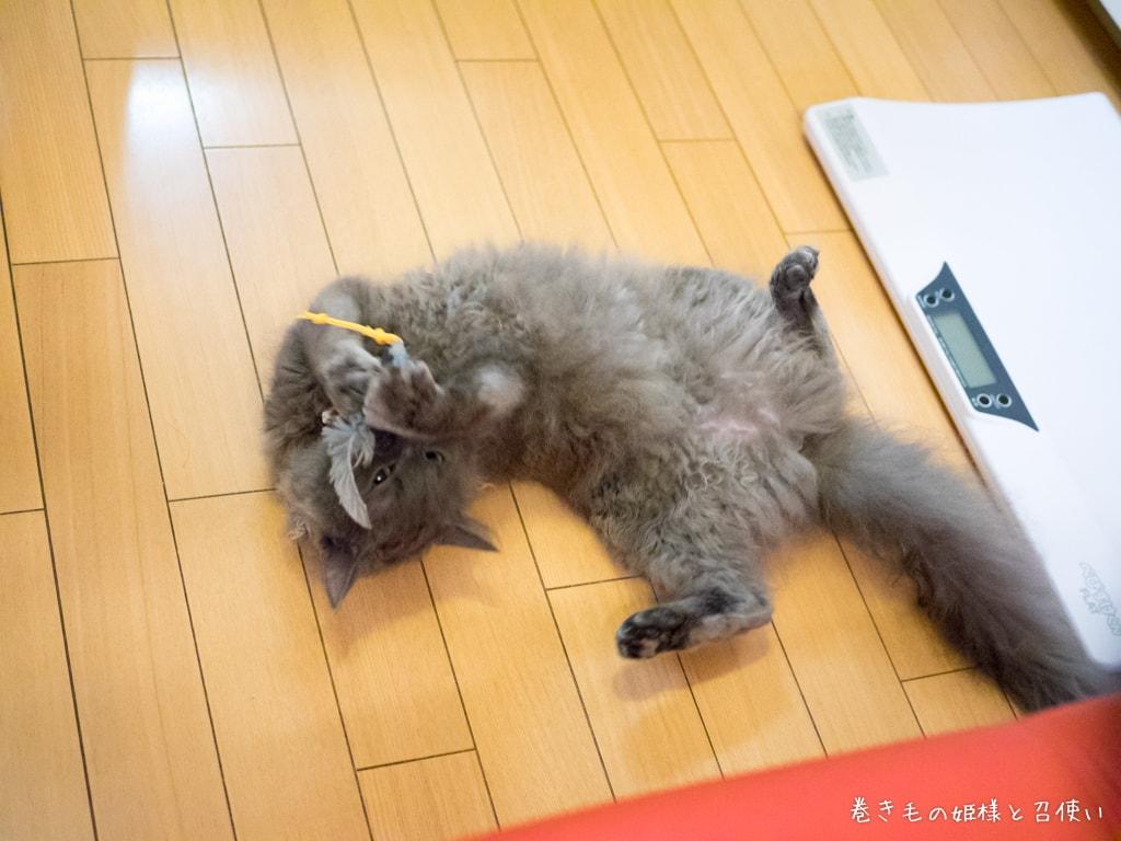 ネズミの玩具で遊ぶ猫5