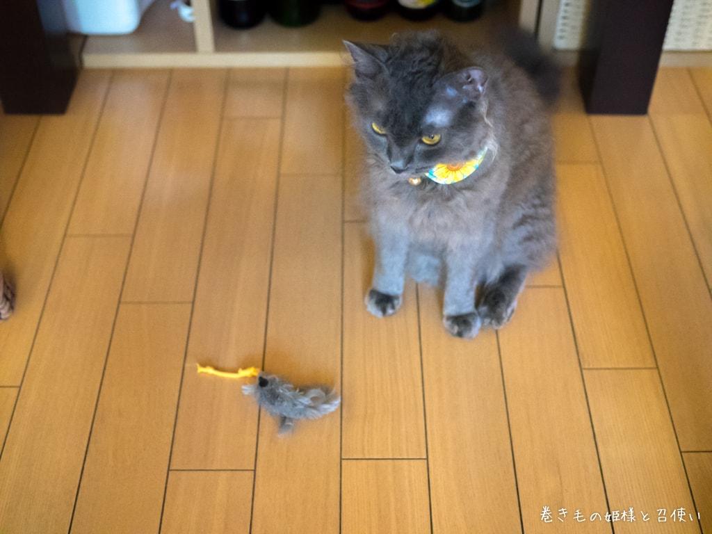 大好きなネズミのおもちゃ