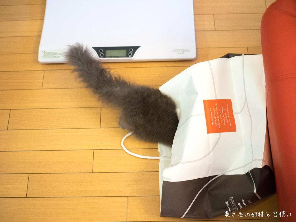 紙袋と猫・朝