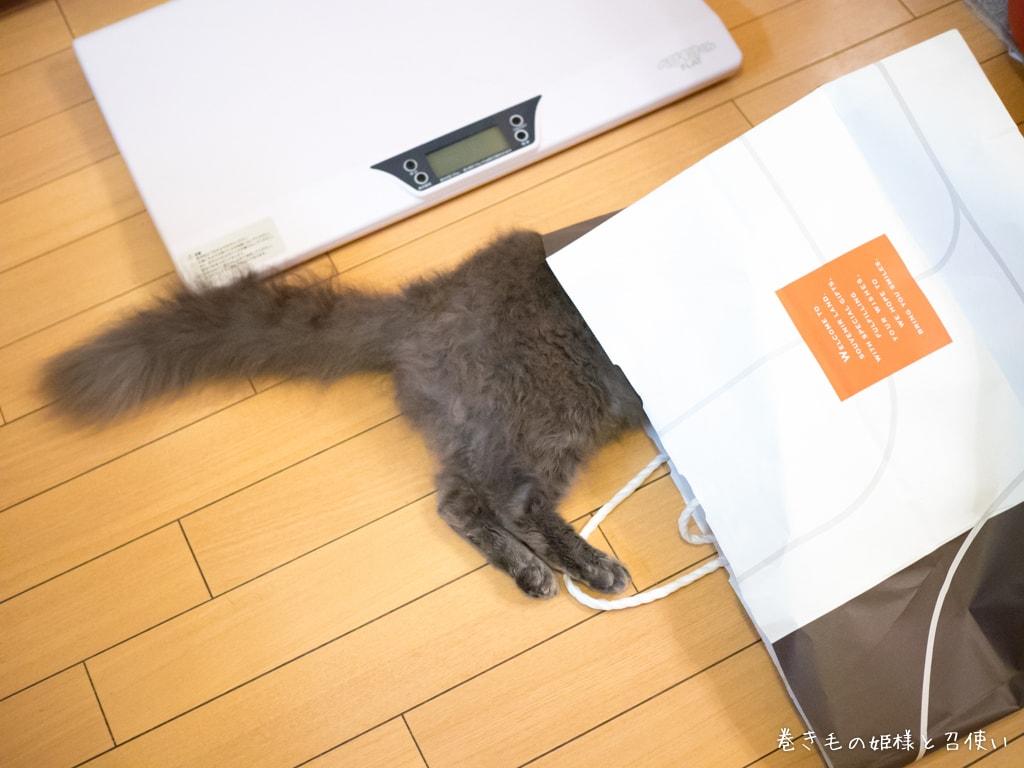 紙袋と猫・夜