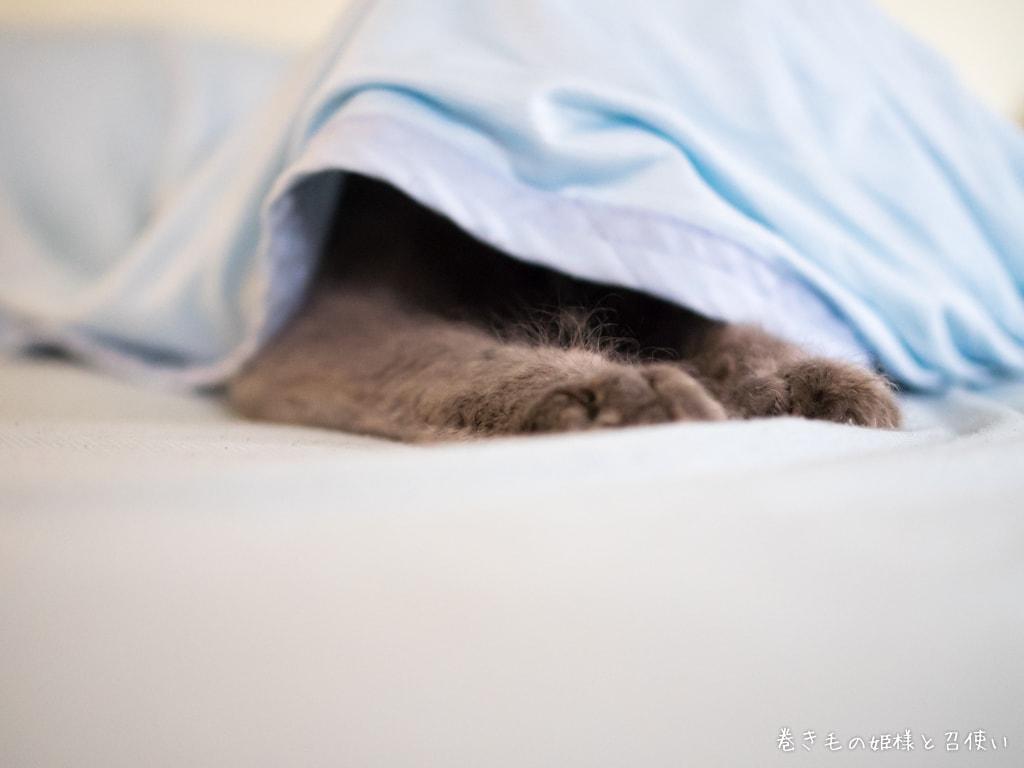 猫写真・覗き穴