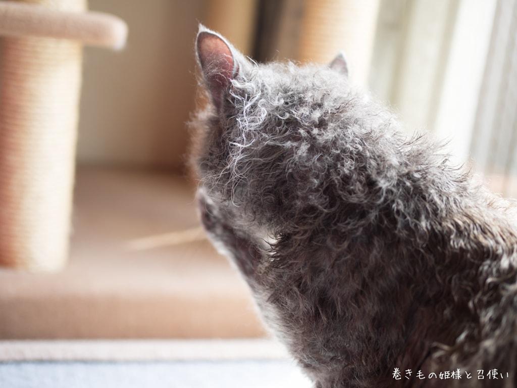 クルンクルンのラパーマの巻き毛