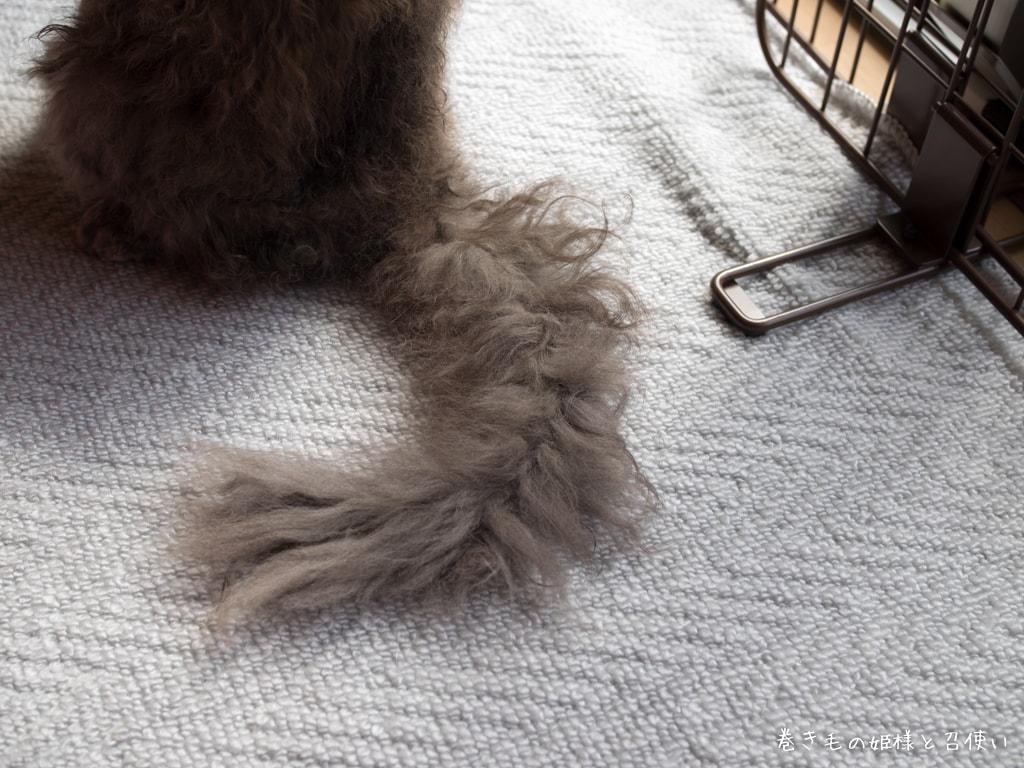 ラパーマの尻尾