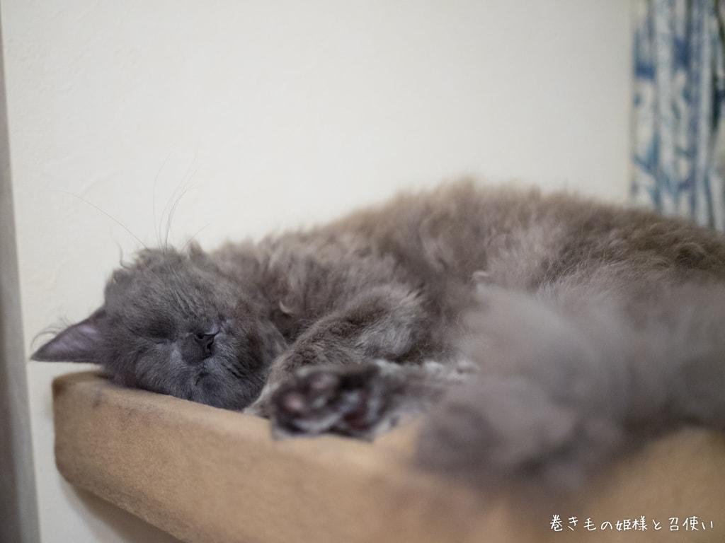 寝子猫紫苑さん