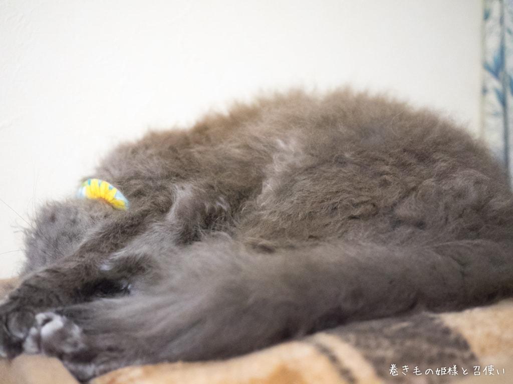 ラパーマの寝顔