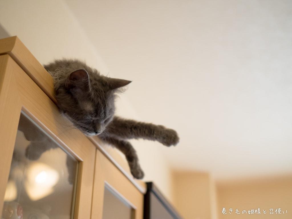 棚の上でうたた寝