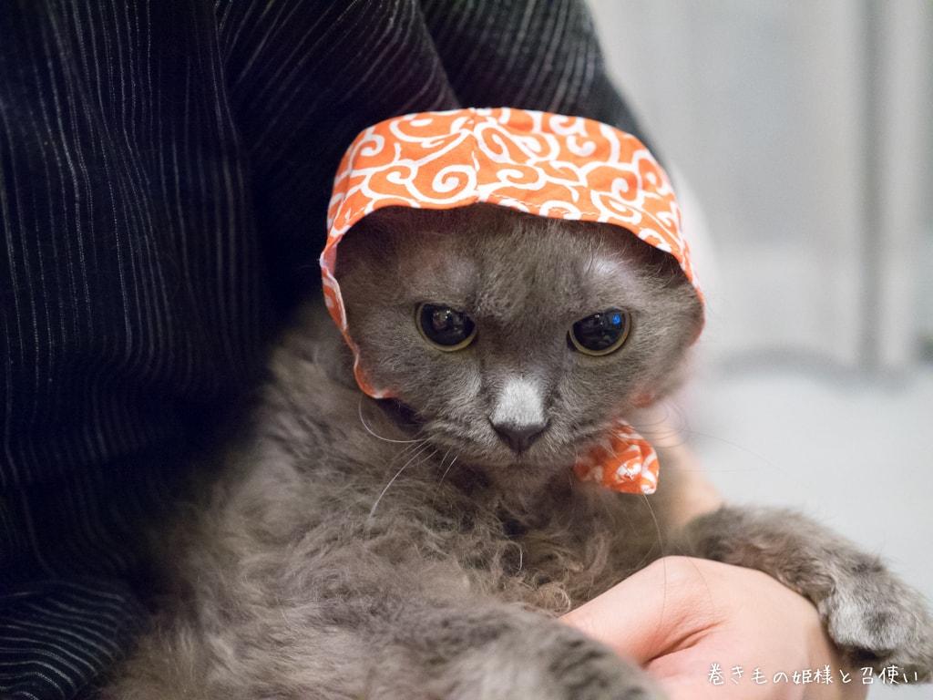 泥棒猫スタイル