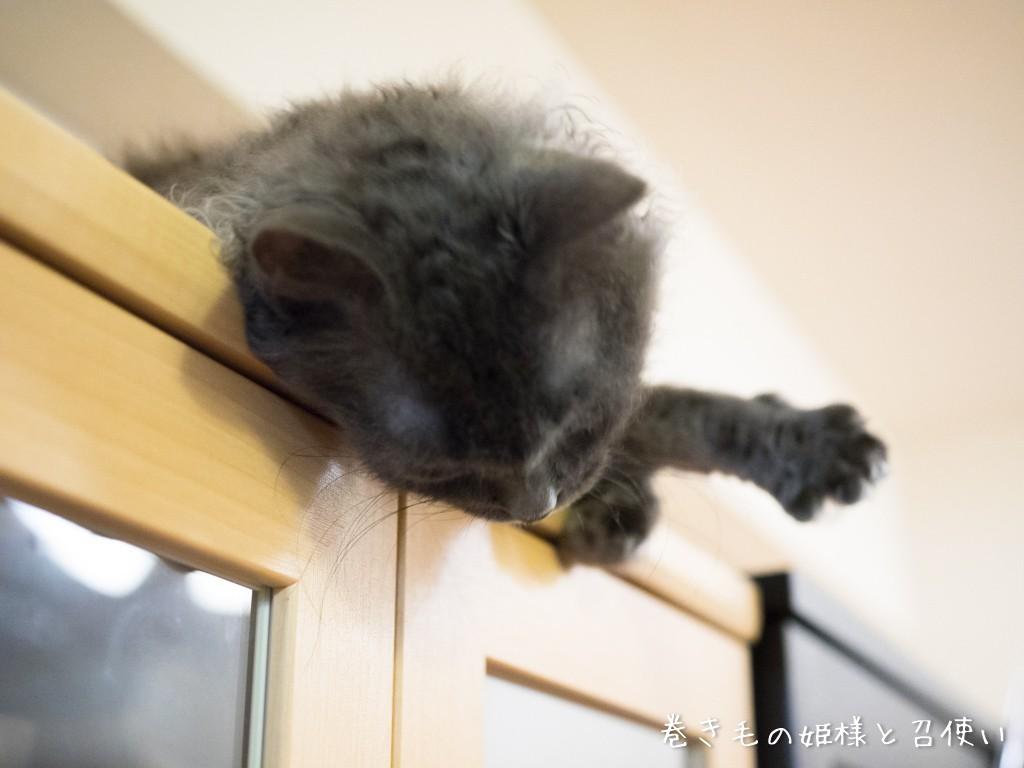 食器棚の上でおねだり