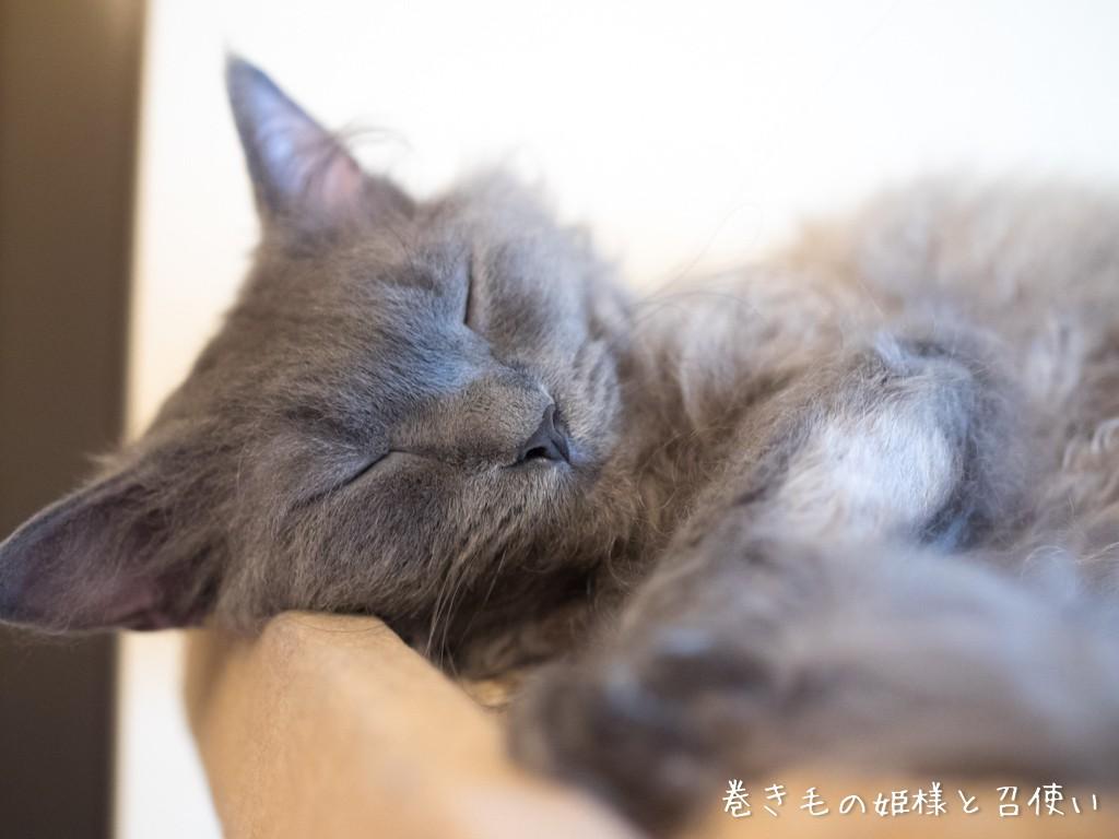 眠たい紫苑さん