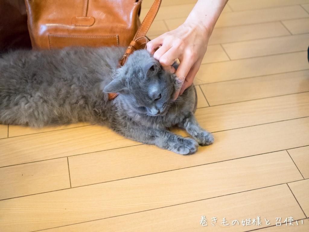 猫トラップ