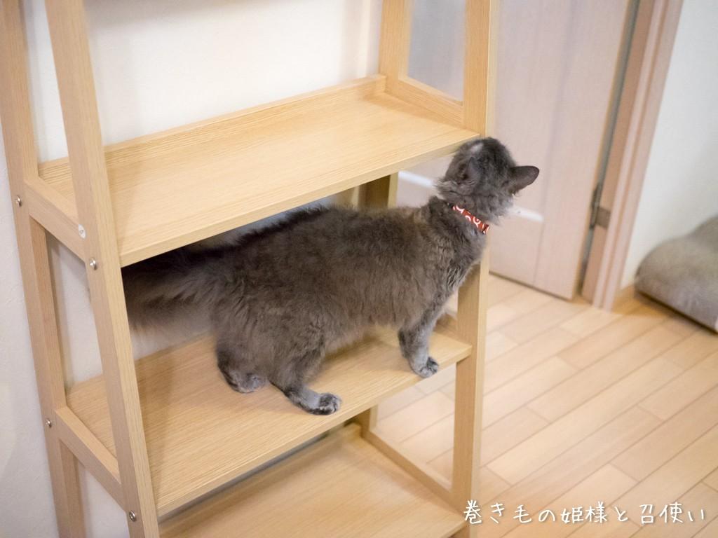 猫タワー?