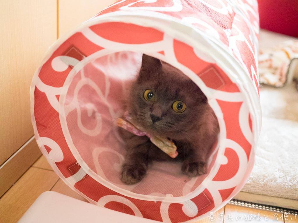 猫壱トンネル
