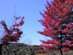 f:id:shioneri:20101121221551j:image