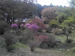 f:id:shioneri:20110430203901j:image