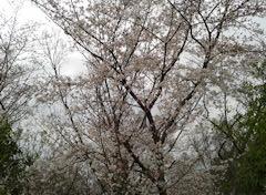 f:id:shioneri:20190330125100j:plain