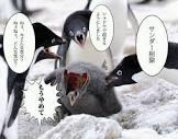 f:id:shionsamidare-0211:20181219171141j:plain