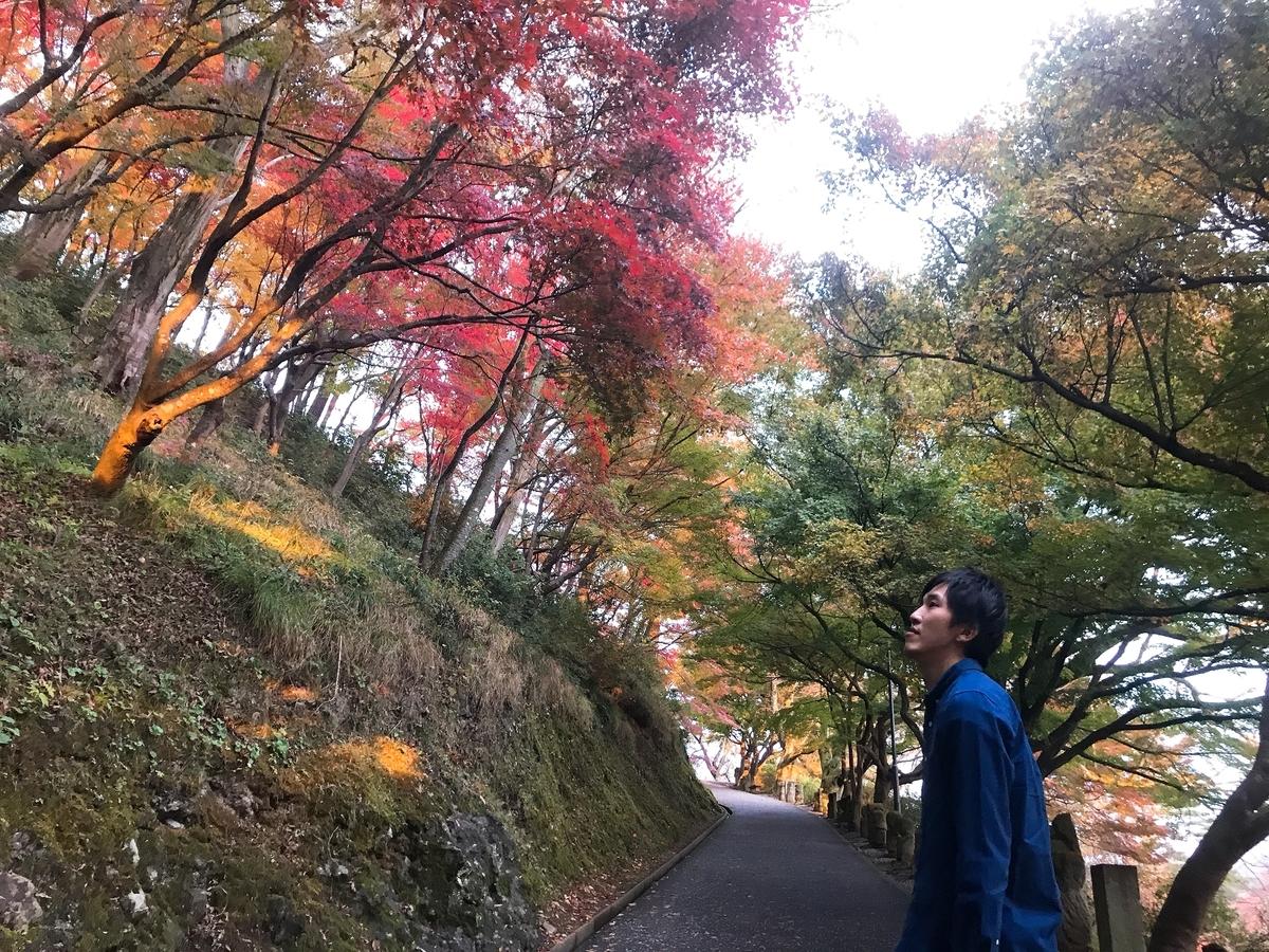 f:id:shiori1016:20191117233520j:plain