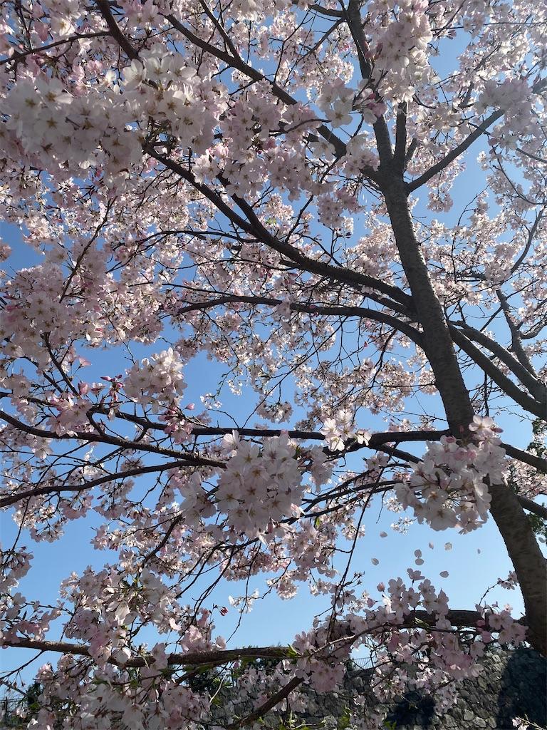 f:id:shiori_amakawa:20210326224955j:image