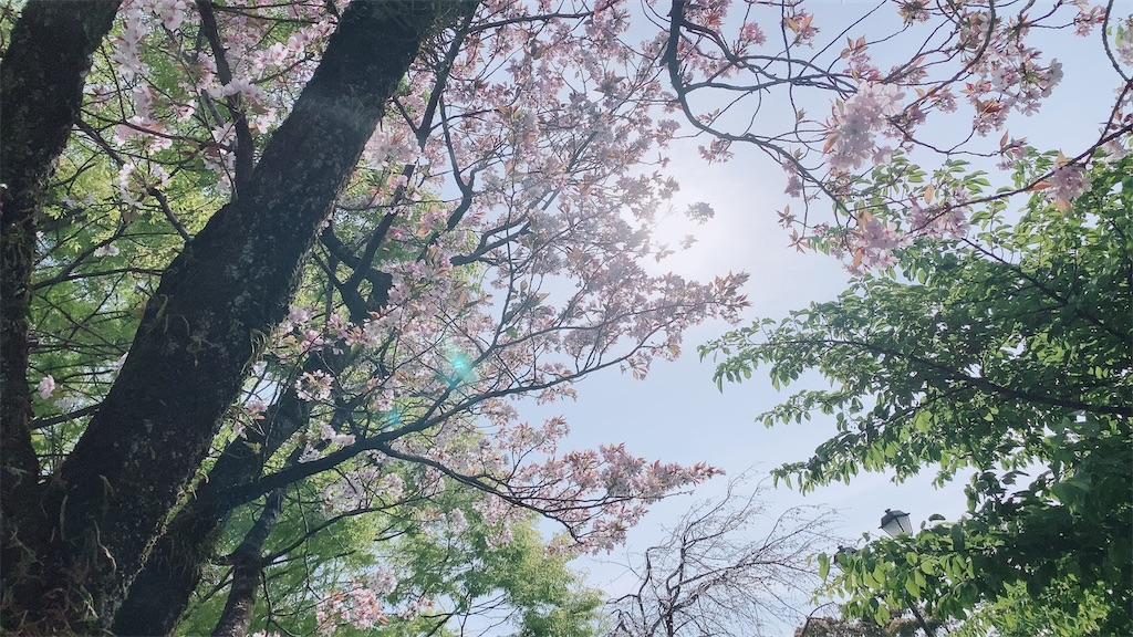 f:id:shiori_amakawa:20210327205957j:image
