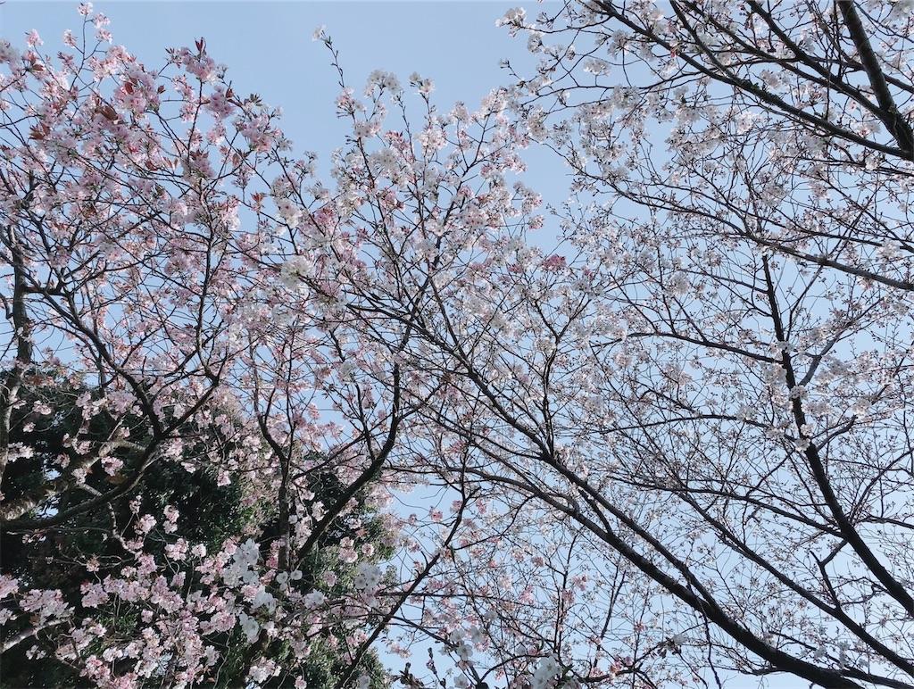 f:id:shiori_amakawa:20210331194732j:image