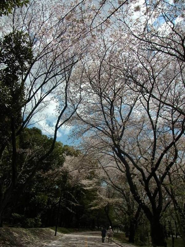 f:id:shiorinote:20140411162508j:plain