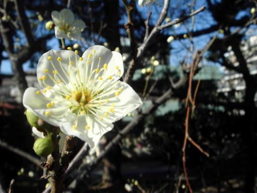f:id:shioshiohida:20100124104520j:image