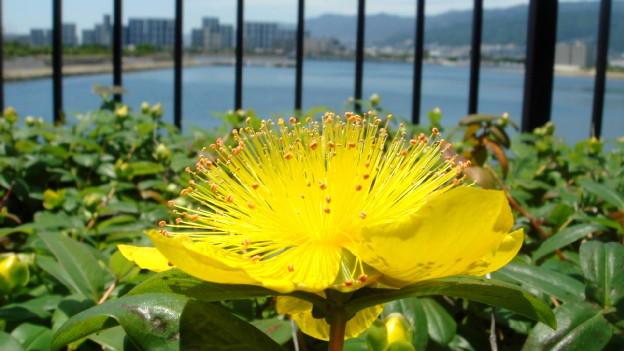 f:id:shioshiohida:20100529120150j:image