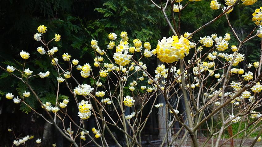 f:id:shioshiohida:20120101052032j:plain