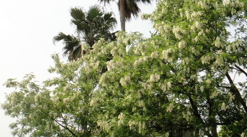 f:id:shioshiohida:20120509144601j:image