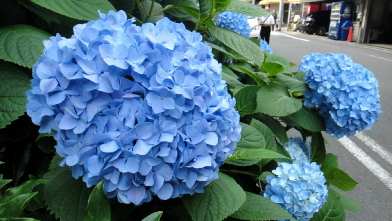 f:id:shioshiohida:20120607152218j:image