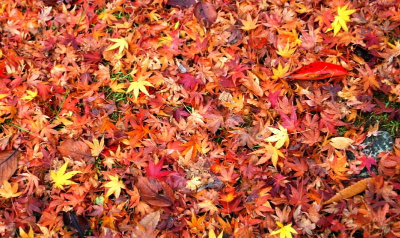 f:id:shioshiohida:20121130103300j:image