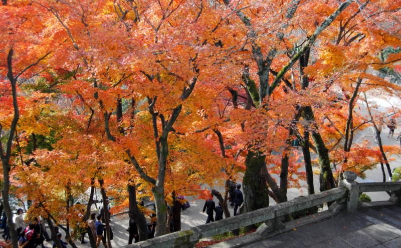 f:id:shioshiohida:20121130113439j:image