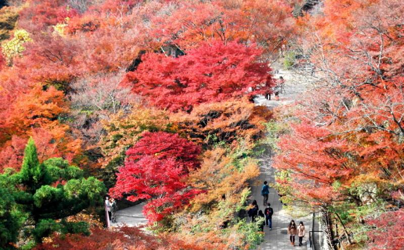 f:id:shioshiohida:20121130114328j:image