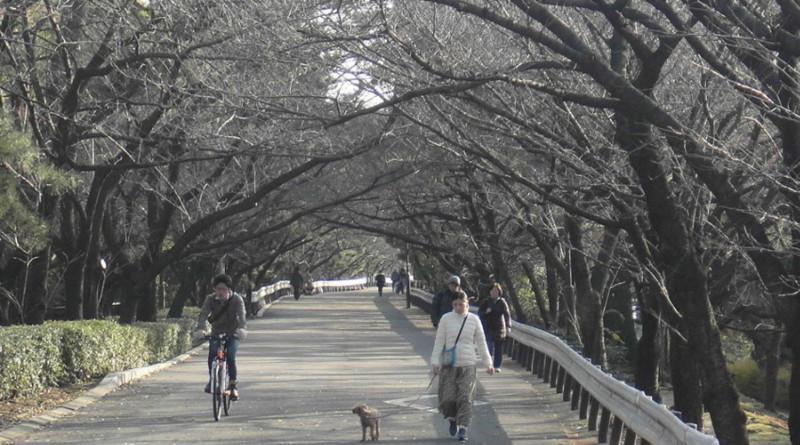 f:id:shioshiohida:20121216150108j:image
