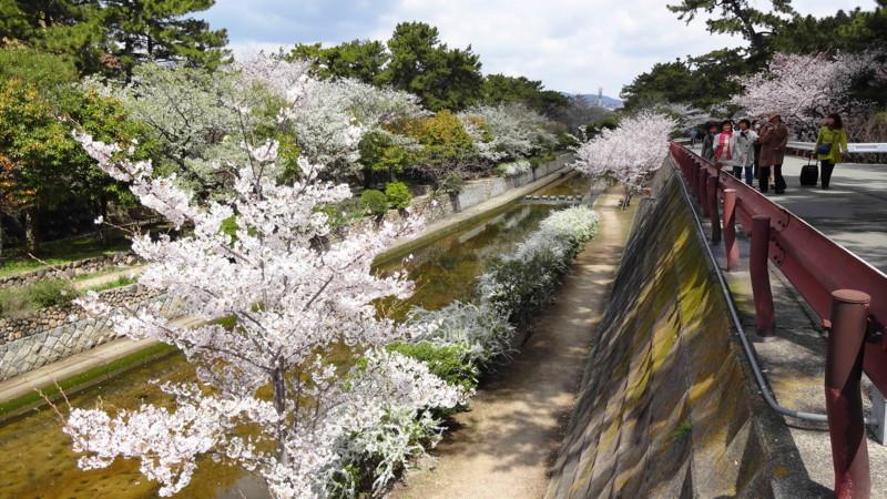 f:id:shioshiohida:20130403110844j:image